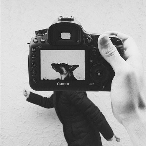 2013.05_-_cachorro_2