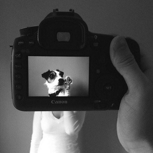 2013.05_-_cachorro_4