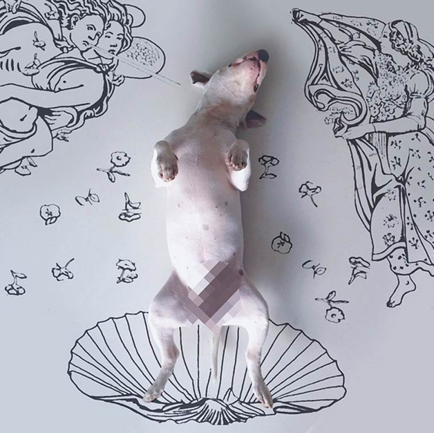 bull-terrier-ilustracoes11