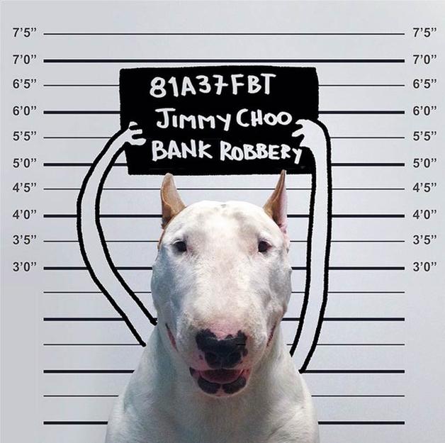 bull-terrier-ilustracoes4