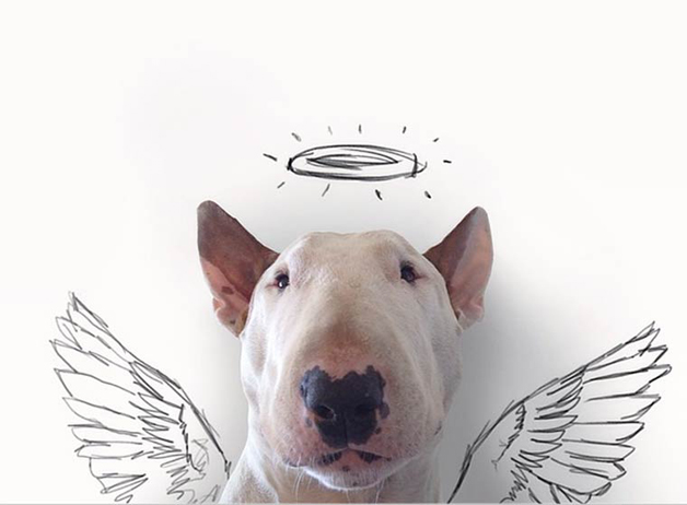 bull-terrier-ilustracoes3